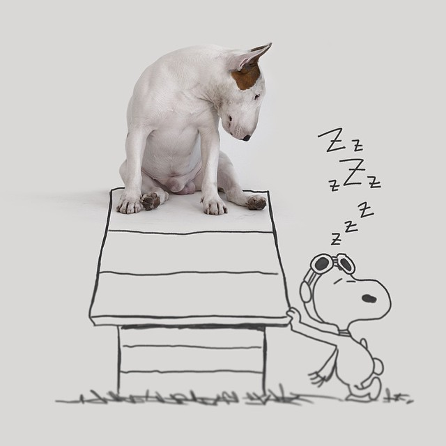 Snoopy Peanuts Dog House // Funny And Cool Dog Drawings & Photo Illustrations, Jimmy Choo Bull Terrier by Rafael Mantesso