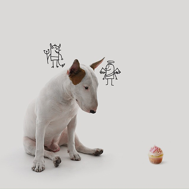 Dog Conscience // Funny And Cool Dog Drawings & Photo Illustrations, Jimmy Choo Bull Terrier by Rafael Mantesso