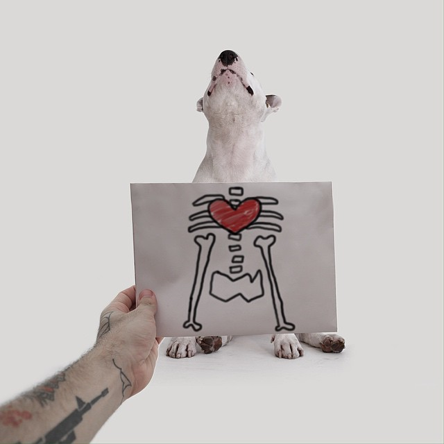 Dog Xray Photograph // Funny And Cool Dog Drawings & Photo Illustrations, Jimmy Choo Bull Terrier by Rafael Mantesso