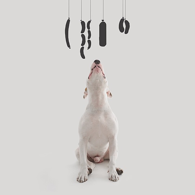 Dog Sausages Photograph // Funny And Cool Dog Drawings & Photo Illustrations, Jimmy Choo Bull Terrier by Rafael Mantesso
