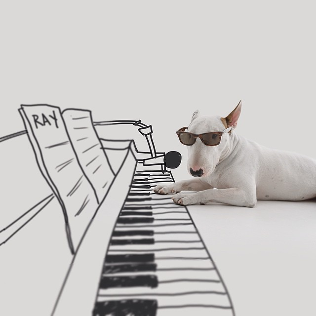 Dog Playing Piano // Funny And Cool Dog Drawings & Photo Illustrations, Jimmy Choo Bull Terrier by Rafael Mantesso