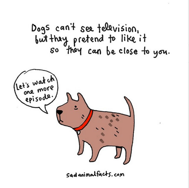 Sad Animal Facts About Dogs // Best Tumblr Illustration Blogs & Art Portfolio