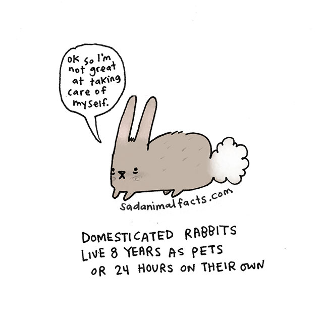 Sad Animal Facts About Rabbits // Best Tumblr Illustration Blogs & Art Portfolio