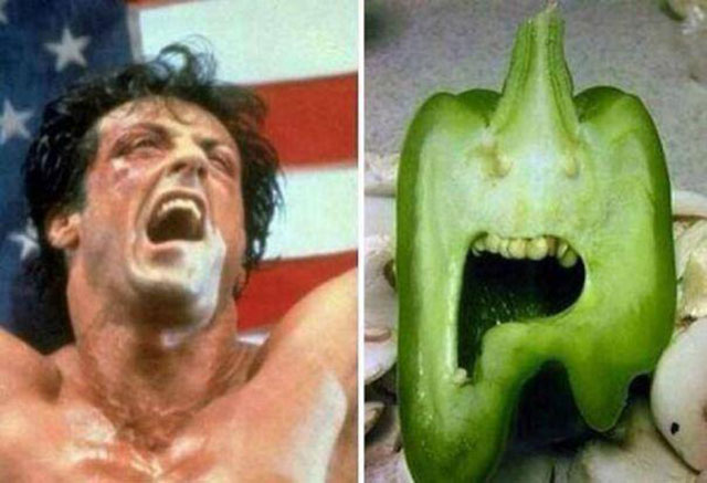 Sylvester Stallone Green Pepper Photograph // Funny Exotic Fruits And Vegetables Photos