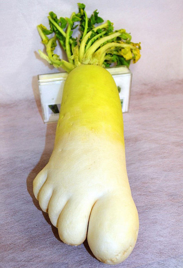 Huge Turnip Footprint // Funny Exotic Fruits And Vegetables Photos