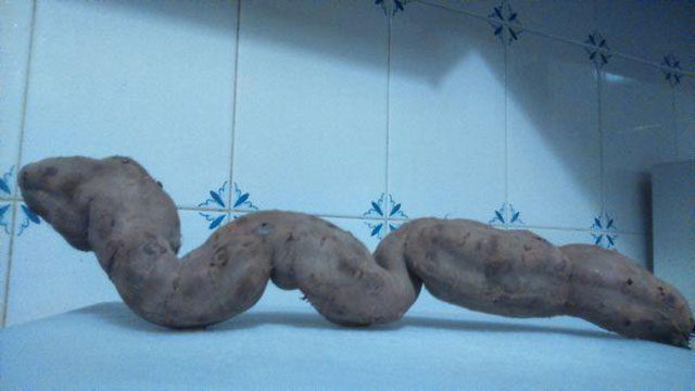 Sweet Potato Snake Photograph // Funny Exotic Fruits And Vegetables Photos