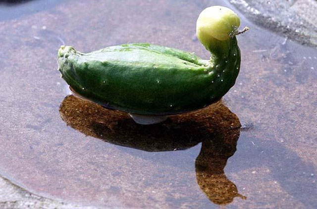 Cucumber Duck Photograph // Funny Exotic Fruits And Vegetables Photos