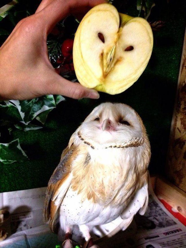 Apple Owl Photograph // Funny Exotic Fruits And Vegetables Photos