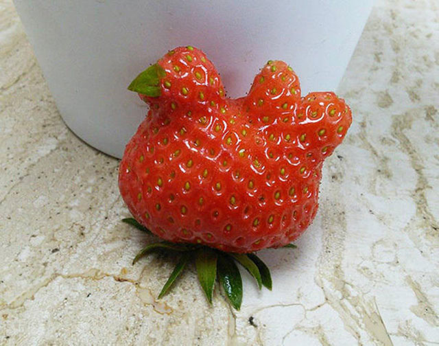 Strawberry Chicken Photograph // Funny Exotic Fruits And Vegetables Photos