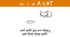How To Become A Cat