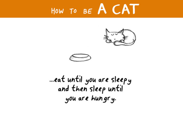 Illustrated How To Become A Cat Today