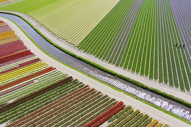 Tulip Fields in the Netherlands | International Drone Photography Contest Winners