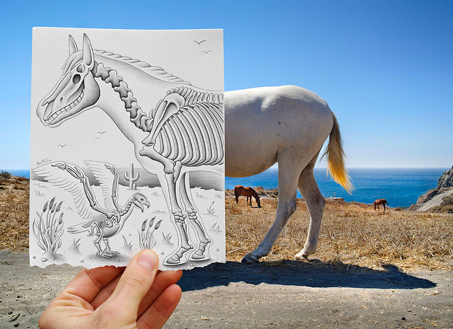 Horse Skeleton Photo // Pencil Photography Drawing, Pencil vs Camera Ideas by Ben Heine