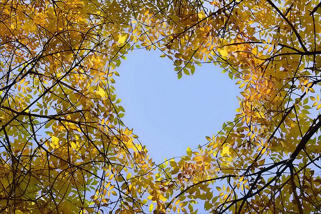 Hidden Tree Heart | Unexpected Modern Hearts Photography