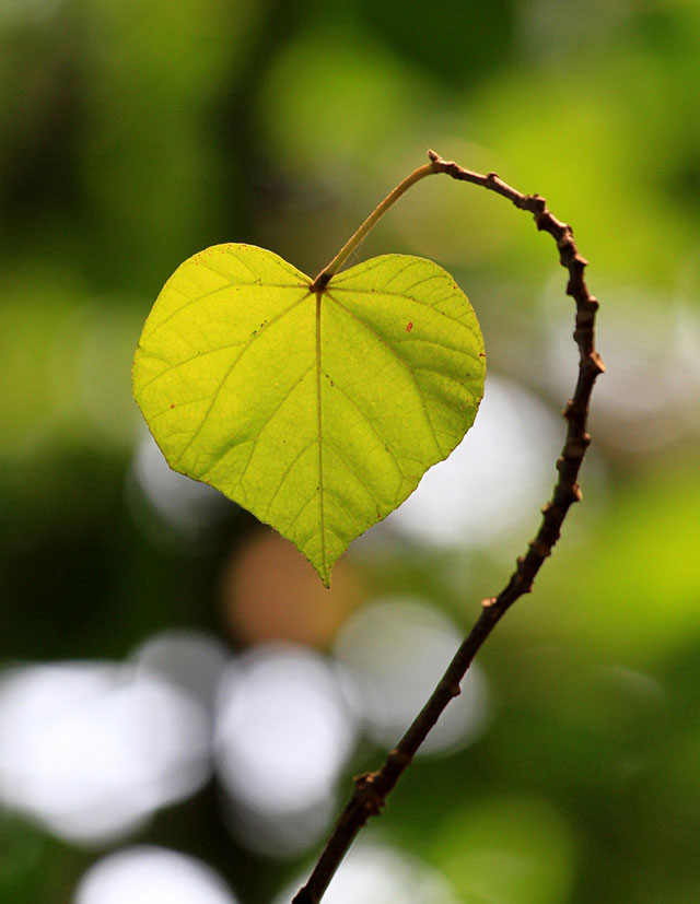 Simple Leaf Heart | Unexpected Modern Hearts Photography